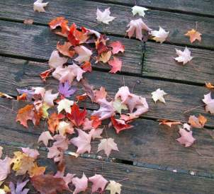 fall-leaves-on-deck